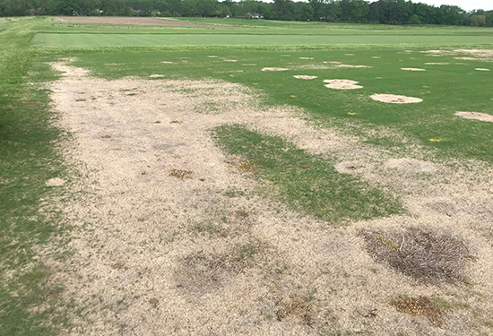 Bermudagrass is being affected by winterkill and spring dead spot in some areas.