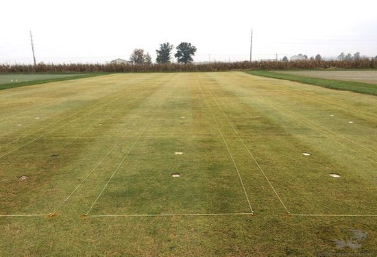 Zoysiagrass is slipping into dormancy.  Some color differences noted among fertility treatments in this large patch trial.